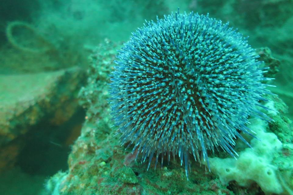 Formule découverte de la plongée - les Aquanautes