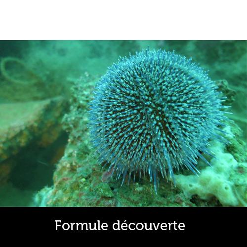 Découverte de la plongée avec les Aquanautes - Capbreton