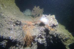 Site de plongée à Capbreton - les roches de Jean