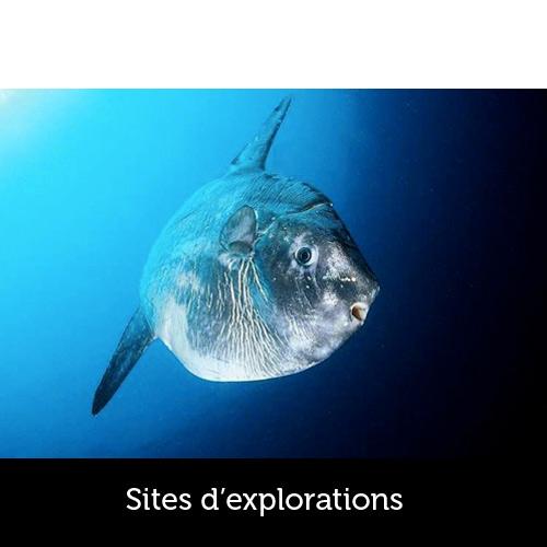 Sites de plongée Capbreton - Les Aquanautes